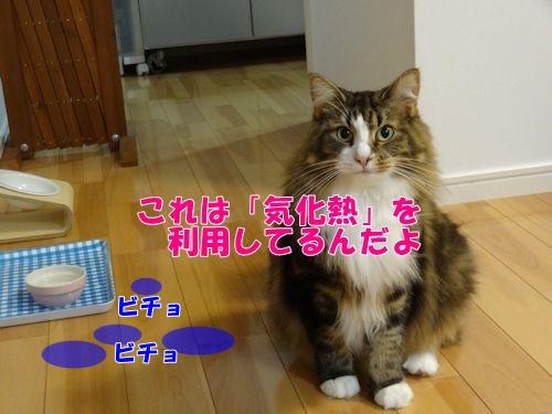cooler8_text2.jpg