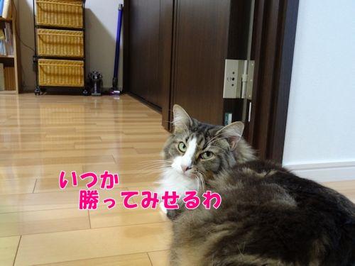 dyrepo14_text.jpg
