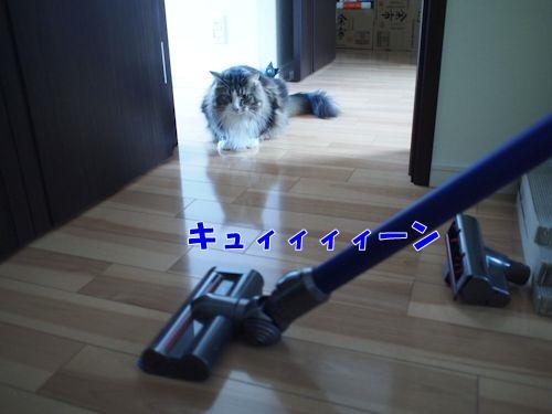 dyrepo3_text.jpg