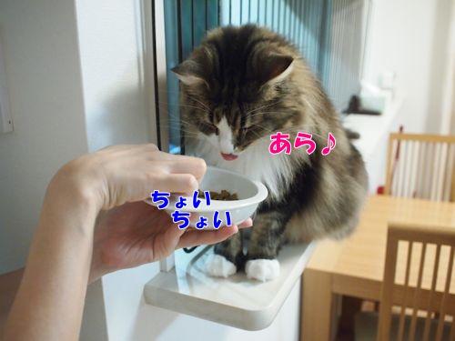 fawn5_text.jpg