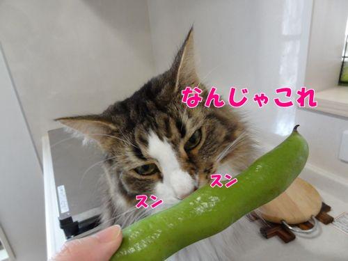harukari3_t・ext.jpg