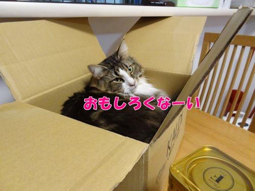 kakekomu4_text.jpg