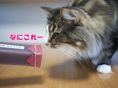 mizuyoukan2_text.jpg