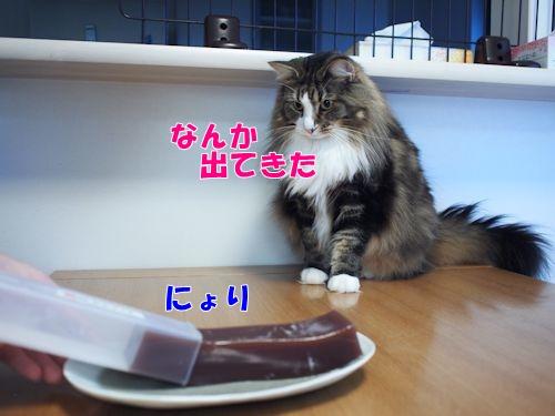 mizuyoukan4_text.jpg