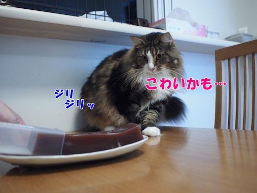 mizuyoukan5_text.jpg