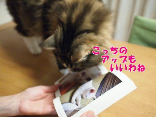 nanasuko10_text.jpg