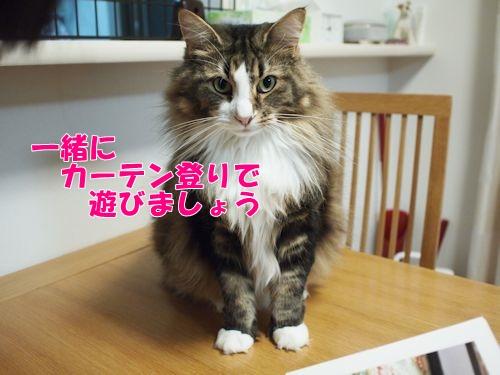 nanasuko11_text.jpg