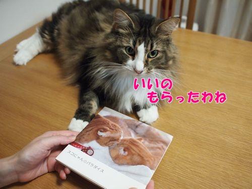 nanasuko2_text.jpg