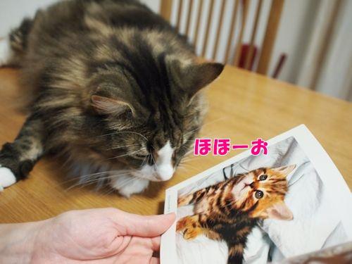 nanasuko5_text.jpg
