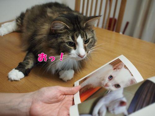 nanasuko7_text.jpg