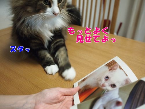 nanasuko8_text.jpg