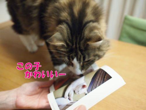 nanasuko9_text.jpg