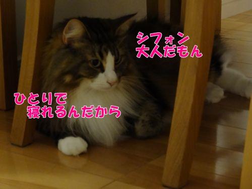 nebusoku4_text.jpg
