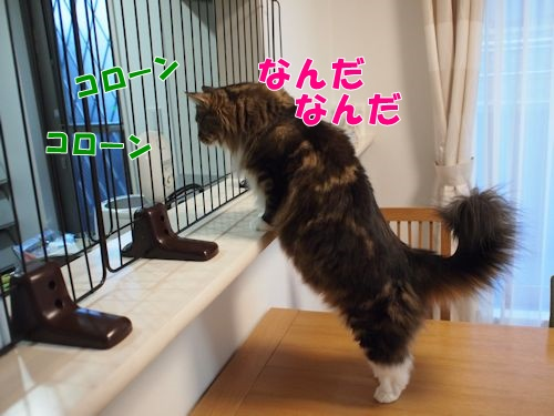 tokage1_text.jpg