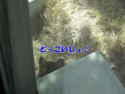 tokage5_text.jpg