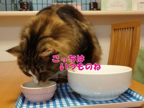 utuwa4_text.jpg