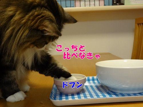 utuwa7_text.jpg