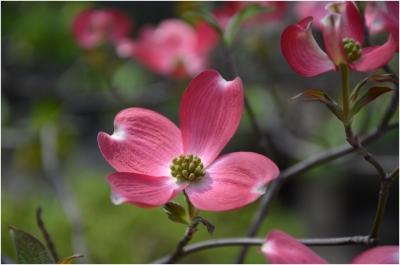 庭の花260419_01