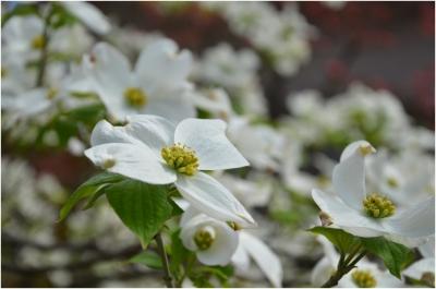 庭の花260419_02