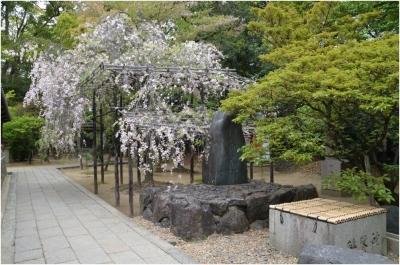 御香宮神社260429_04