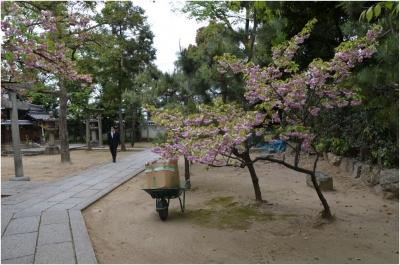 御香宮神社260429_07