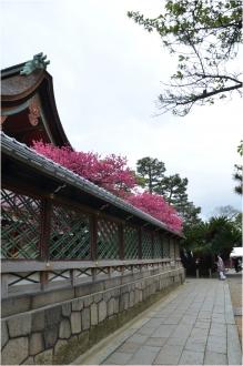 御香宮神社260429_09