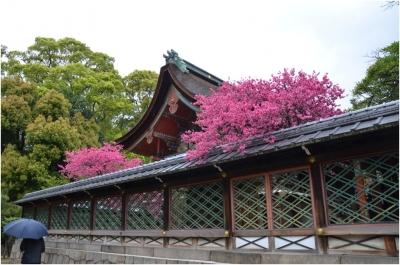 御香宮神社260429_13