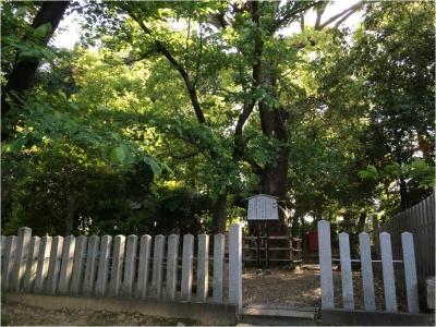 藤井寺羽曳野260510_06_16
