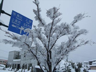 s-雪の花②