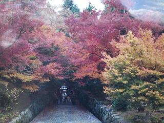 秋の景色0001