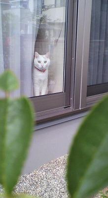 s-窓の外を見るこゆき