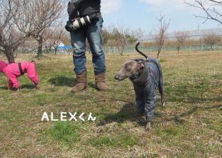 ALEXくん