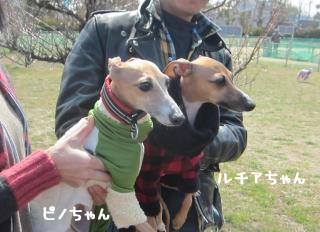 ピノちゃん&ルチアちゃん