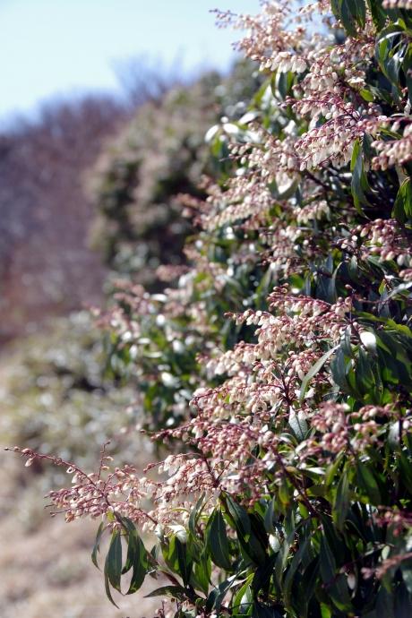 20140415梶ヶ森の花09