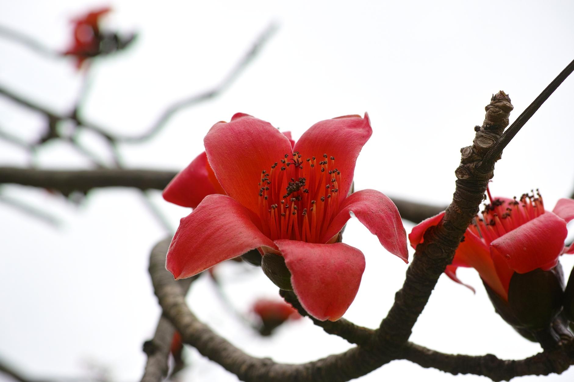 Taiwan2014Spring414.jpg
