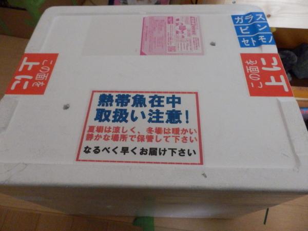 P3060142.jpg