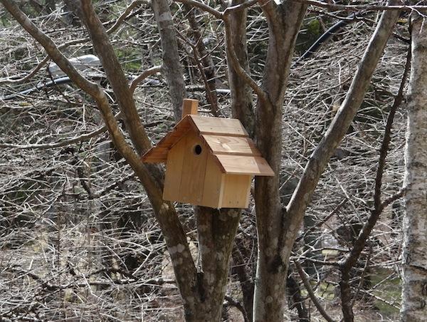 新築巣箱2