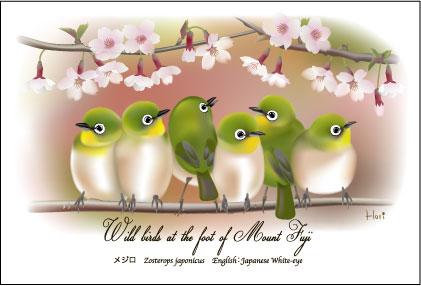 メジロ桜2枠付き加工用