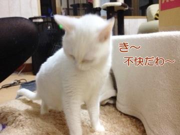 neko140411-3.jpg