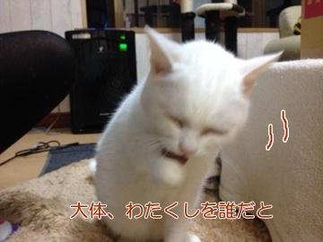 neko140411-8.jpg