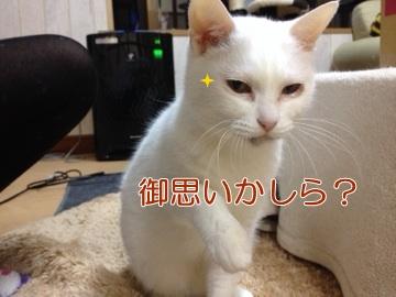 neko140411-9.jpg