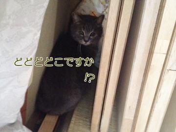 neko140518-7.jpg