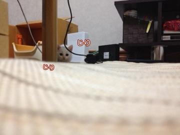 neko140710-3.jpg