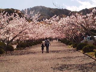 桜 安房神社