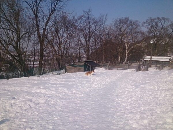fc2_2014-03-02_17-29-41-322.jpg