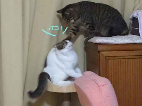 140218-01karl-taiga