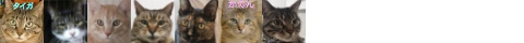 140514cats-s