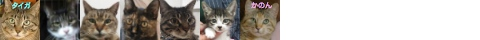 140604cats-s