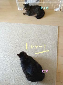 140721-3hima-taiga