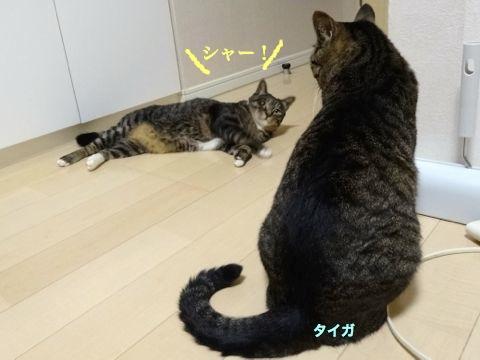 140721-4hima-taiga